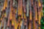 Fotografia fine art de alta resolução,  fotografia de textura feita por galhos de arvoré seca.