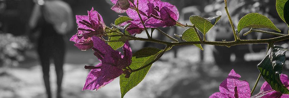Quadro Primavera - Spring Frame by Kcris Ramos