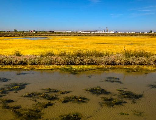 Fine art O lago dourado