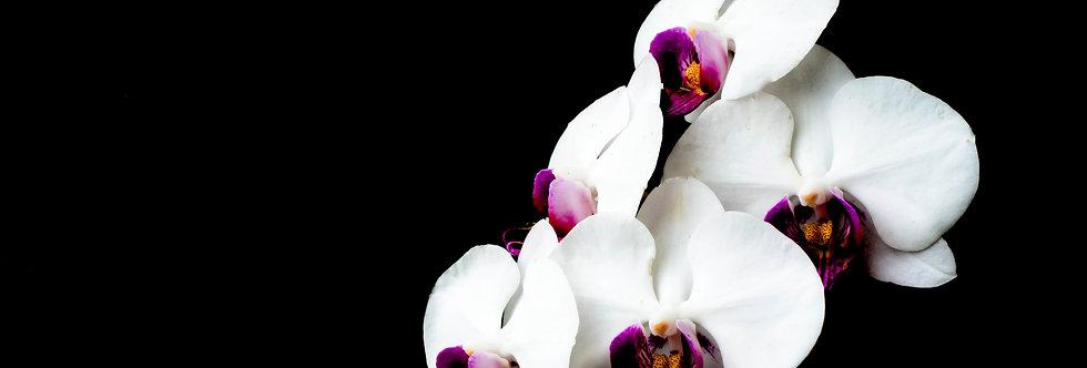 Quadro Orquídeas em preto e branco - Frame Orchids in black and white by Kcris Ramos