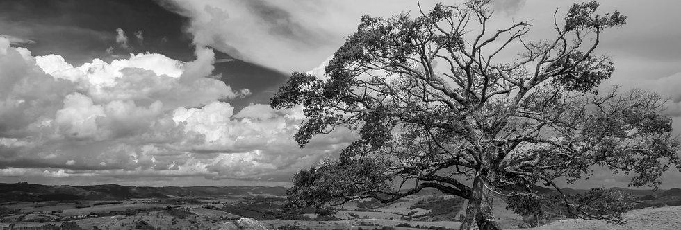 Quadro A Árvore da Vida por Kcris Ramos