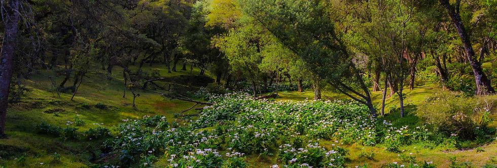 Quadro Floresta de Lírios - Lilies Forest Picture by Kcris Ramos