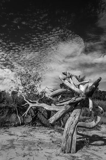 Fine Art A Última Árvore