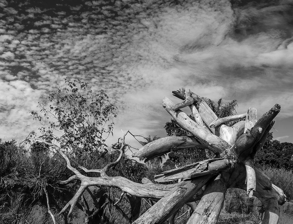 Quadro Árvore do Serrado por Kcris Ramos