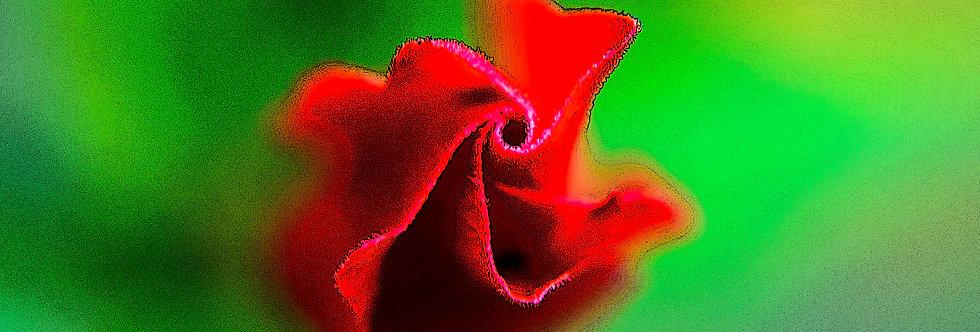 Quadro Flor de Hibisco - Hibiscus Flower Frame by Kcris Ramos