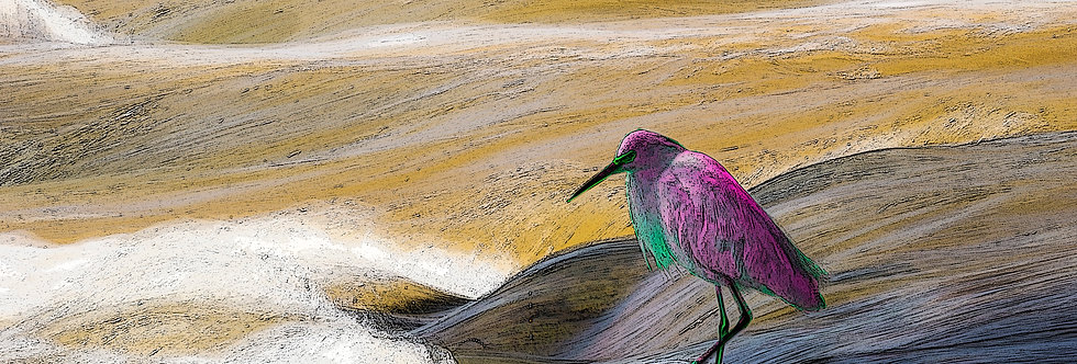 Quadro A Garça Rosa - Frame The Pink Heron by Kcris Ramos