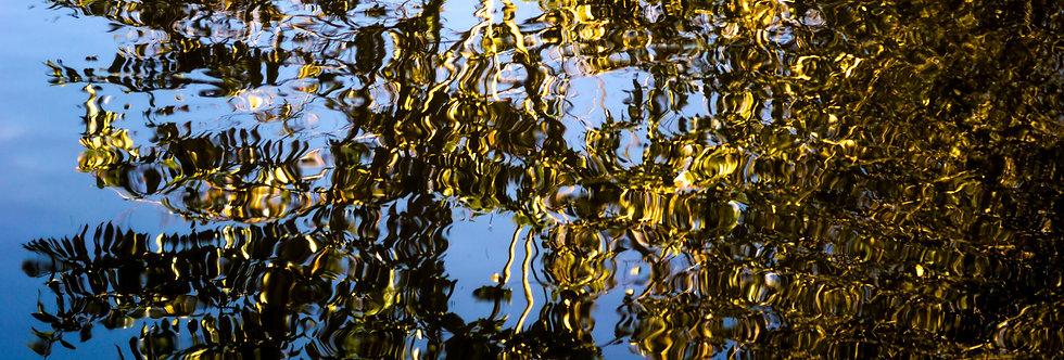 Quadro de arte fotográfica Reflexos da Natureza.By: Kcris Ramos