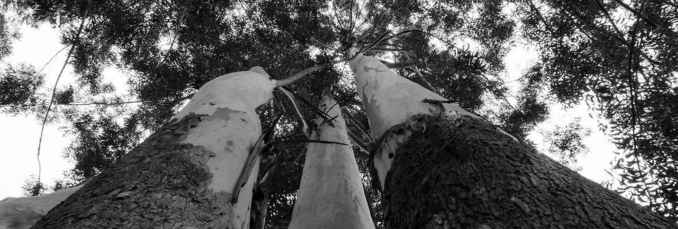 Fotografia Árvores do vento por Kcris Ramos