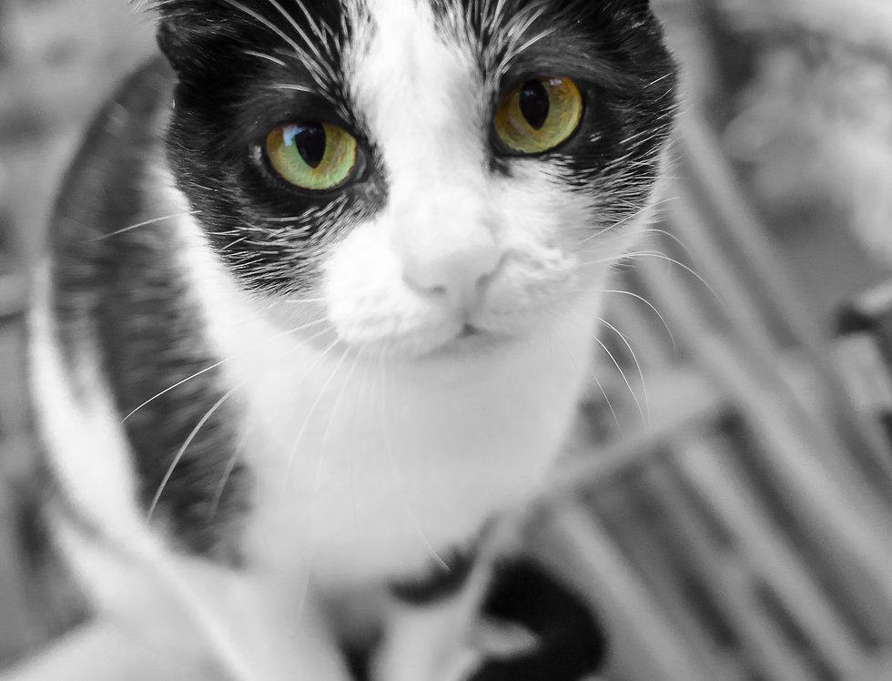 Fotografia Gato da janela - Window Cat Photography