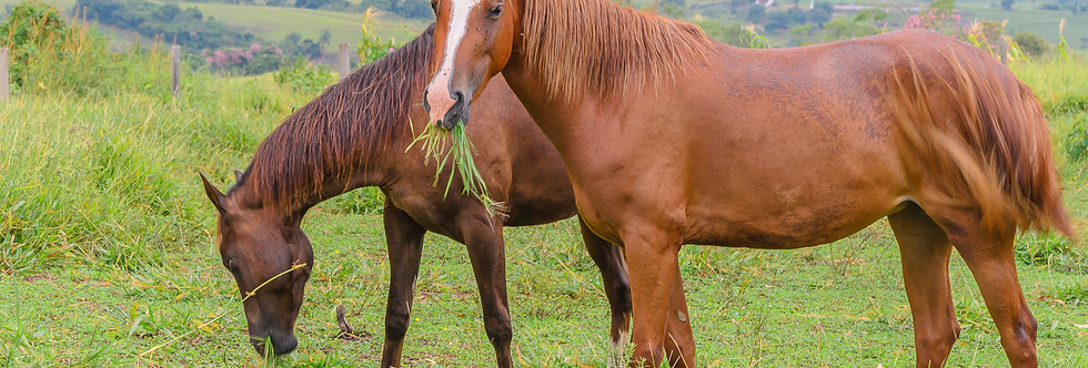 Quadro Cavalos das montanhas - Picture Horses of the mountains by Kcris Ramos