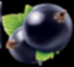 blackberries_687162466_RM_050814.png