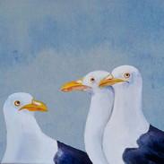 gulls.jpg