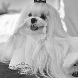 Tiffany (La Mamma) ❤