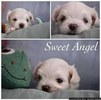 Sweet Angel ❤