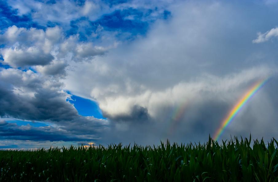 Corn Rainbow