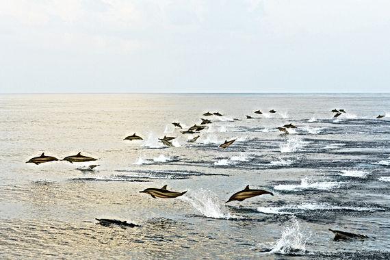 Springende Delfine - Werte