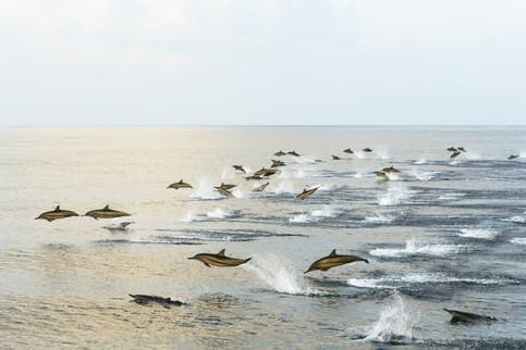 Delfine - Werte