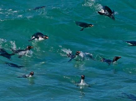 Pinguine in ihrem Element - Mobiles Personalmanagement