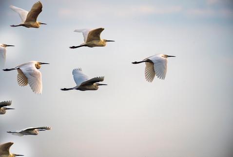 Zugvögel - Strategisches Personalmanagement
