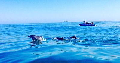 Byron Bay dolphins