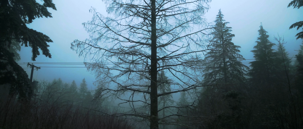 TLR-WINTERTREE.png
