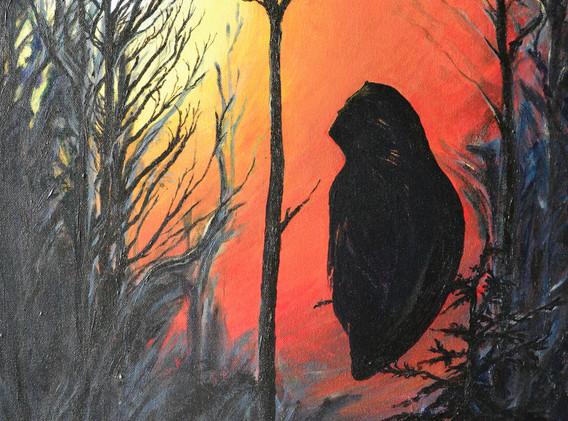 Owl New Dawn