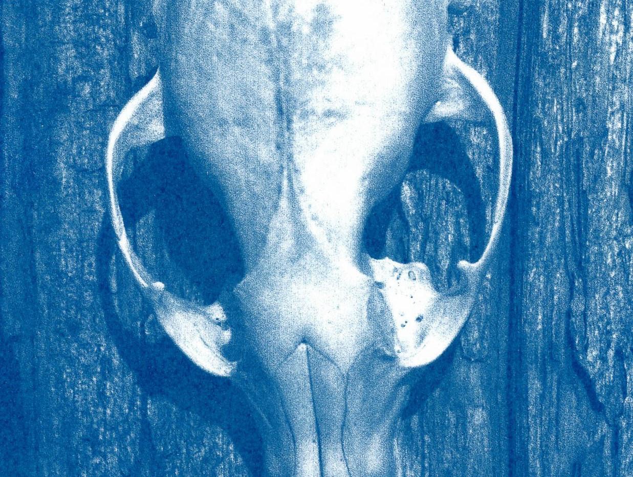 former occupant skull