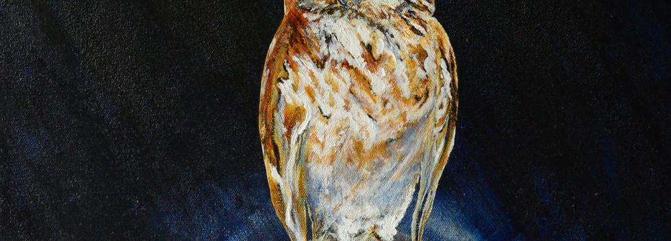 Eastern Screech Owl Full Moon