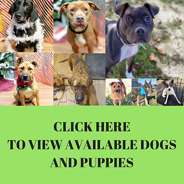 CLICK HERETO VIEW AVAILABLE DOGS AND PUP
