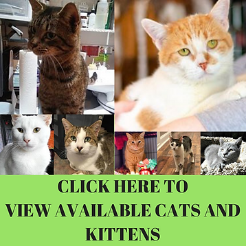 CLICK HERE TO VIEW AVAILABLE CATS AND KI