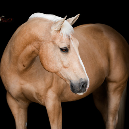 Crescent Farms / Equine Art Session / Eureka, MO
