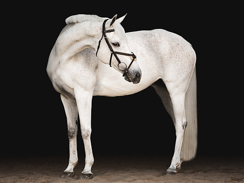 Three Equine Art Sessions