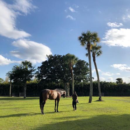 The Equine Photography Retreat 2020 // Wellington, FL