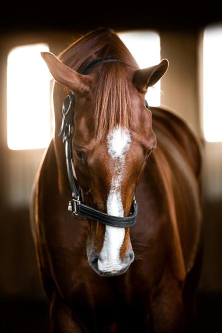 2019 Favorites: Equine Art