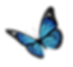 kisspng-monarch-butterfly-flight-royalty