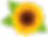 Sunflower_PNG_Clip_Art_Image.png