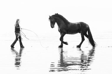 Free on the beach - Horse portrait