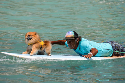 Surf's up - Photo shoot dog