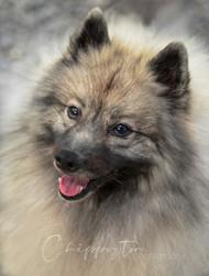 Professional dog photography portraits