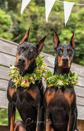 Island Dog Magazine Photo Shoot