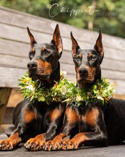 Photo shoot for Island Dog Magazine