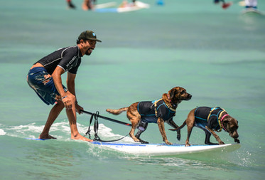 Surf's up - Photo shoot dogs
