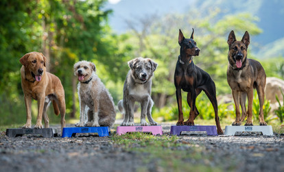 Group shot of working dogs
