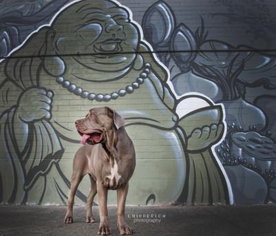 Cane Corso dog portrait - street art