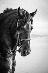 Close up - Horse portrait
