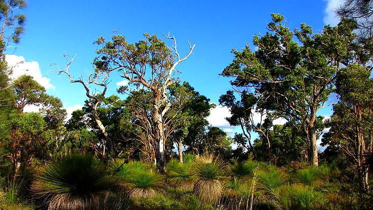 Bushfire protection Batemans Bay south coast NSW