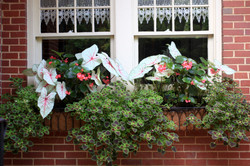 annual window boxes