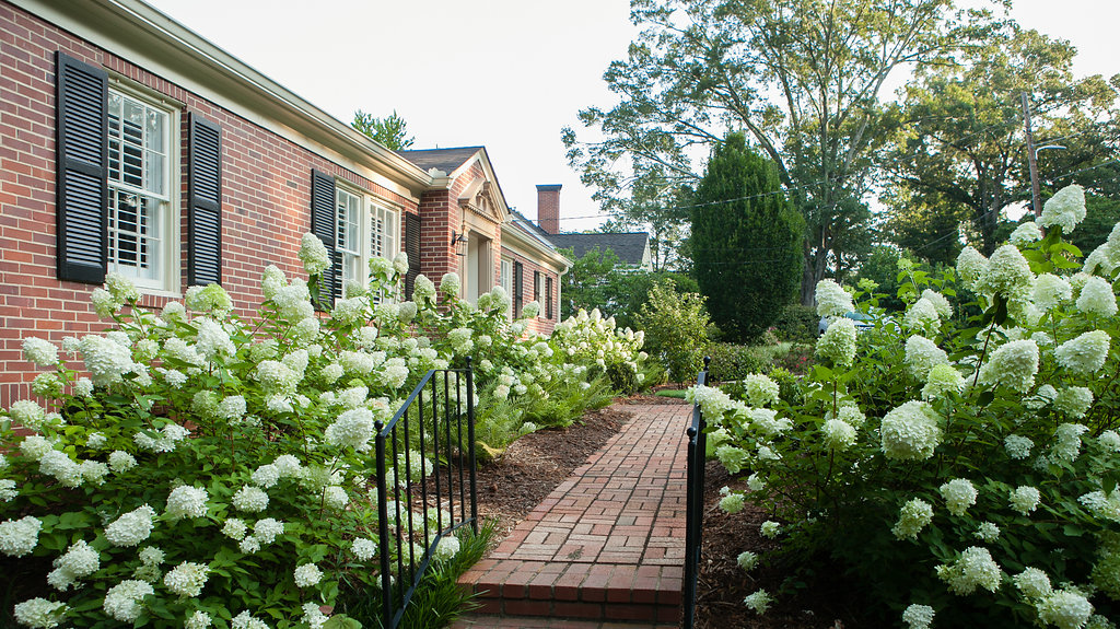 limelight hydrangea planting