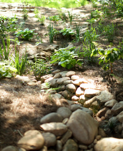 rain gardens & creek bed