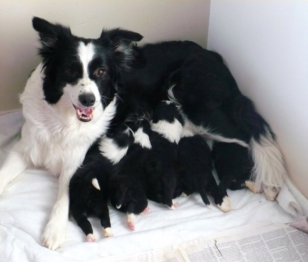 CURRENT LITTERS